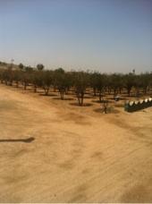 مزرعه كبيره للبيع