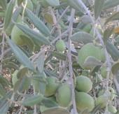 مزرعة مساحة عشرون فدان في طريق الاسكندرية الصحراوي