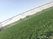 مشروع زراعي للبيع بكامل معداته