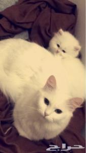 قطه مع طفلها