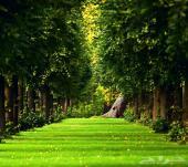 عشب صناعي حول سطح منزلك الى ملعب او حديقه بمواصفات اوربيه