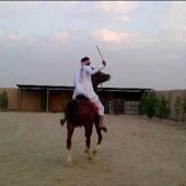 حصان عربي اصيل جميل بسعر مغري