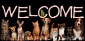 بيت البيطري الصغير للعناية الكاملة لحيوانك الاليف..Vet Care Pet..