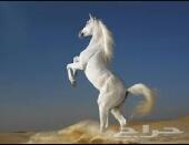 دعوه تلى اهل الخيول