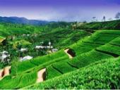 عروض سياحية سريلانكا