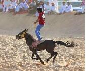 لبيع حصان هادي