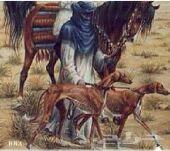 قروب على تل قرام للفروسيه الخيول والصيد