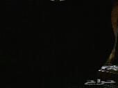 للبيه هايلوكس 2012
