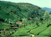 عروض سياحية لسريلانكا