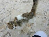 للبيع كلب وقطة في الرياض ديراب