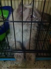 قطاوه للبيع في الرياض