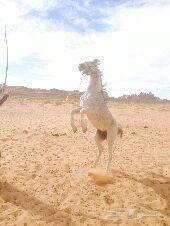 حصان ( عناد)