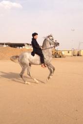 حصان جميل