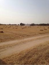مزارعه للبيع في منطقه شرقيه