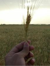 مشرف ووكيل مزارع سعودي يبحث عن عمل