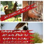 أيواء خيول والعناية التامة الخيول بلاايجار الشهري الرياض الجنادرية